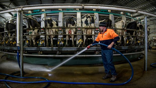 Rod Newton cleaning the milking shed at his Whorouly dairy farm in the Ovens Valley.
