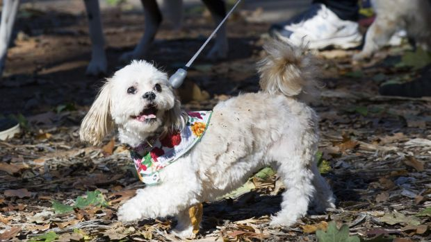 The Million Paws walk will now start at Rond Terrace.