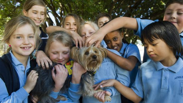 Molly, a certified service dog, attends Ainslie School with twins, Hannah and Olivia Weber, who have diabetes and ...