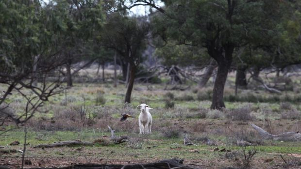 Property owned by Barnaby Joyce near Gwabegar, described by locals as 'mongrel country'.