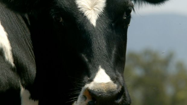 Unions say the long-running industrial dispute at the Parmalat dairy processing plant in northern Victoria is over.
