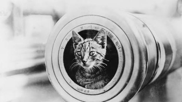 Red Lead, the ship's cat, on board HMAS Perth. She perished with the vessel.