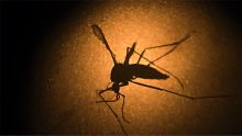 The spread of Zika virus has been primarily driven by mosquitos.
