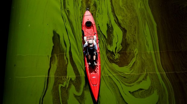 Algae may be dangerous in river systems but can be farmed for profit.