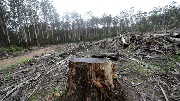 The Andrews government is considering creating a new national park in the central highlands.