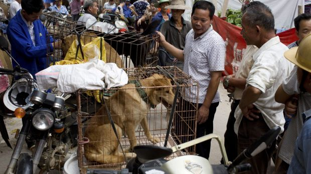 Dogs for sale in Yulin.