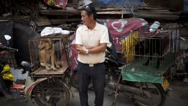 A vendor offers dogs for sale ahead of a dog meat festival in Yulin in south China's Guangxi Zhuang Autonomous Region.