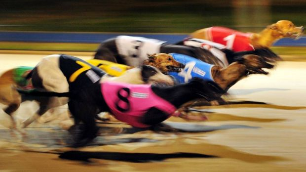 Greyhound racing ban is tough but necessary.