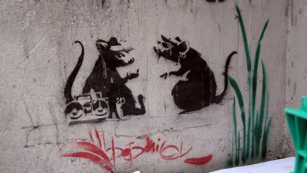 An example of Banksy's rat stencils, which have dwindled in number in Melbourne because of vandalism, construction and ...