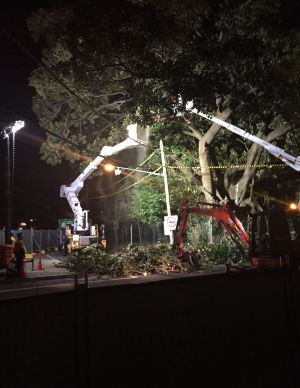 """""""The whole thing will be gone by morning and it's just unbelievable"""": Randwick City councillor Kathy Neilson said."""