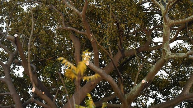 On Monday morning, it was clear a number of branches had been lopped off.