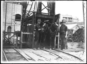 Miners and their horses at the Balmain Colliery near Sydney, from the 1930s.