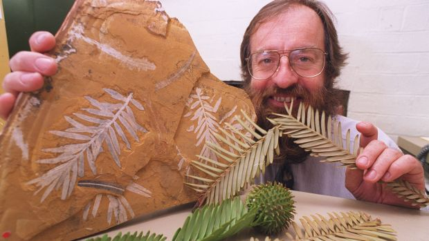Ken Hill, a senior botanist at the Royal Botanic Gardens in 1994 with a 150-million-year-old Jurassic fossil of ...