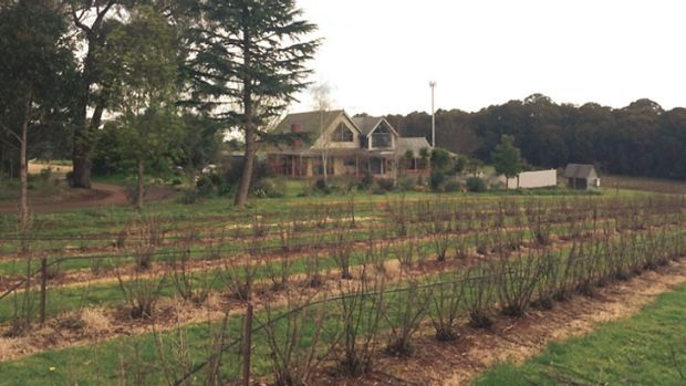 The Tromp family's home, and currant farm in Silvan.