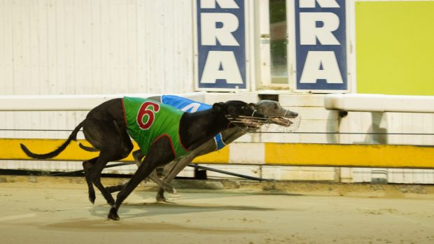 The Canberra Greyhound Racing Club will continue to operate with or without support and funding from the ACT government.