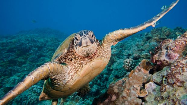 A free online course has been released that teaches how to help a stranded marine turtle.
