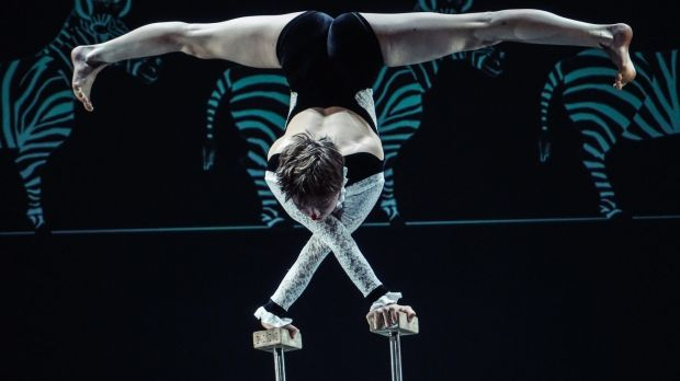 Flexibility and balance in Circa's Carnival of the Animals.