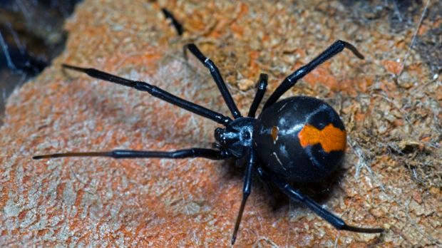 The man tried to fly 4000 insects, 27 spiders and seven scorpions to Abu Dhabi.