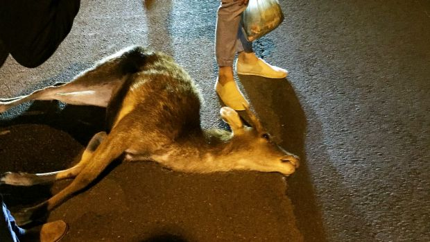 Police Investigate After Deer Killed By Car On Busy Road
