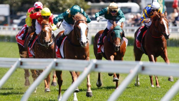 Slipper dreaming: Khan raced away with the Breeders Plate at his only start last year.