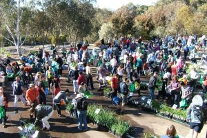 A scene from the very popular native plant sale at the Australian National Botanic Gardens in 2009.