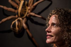 Australian Museum gets an attendance boost from its Spiders: Alive and Deadly exhibition
