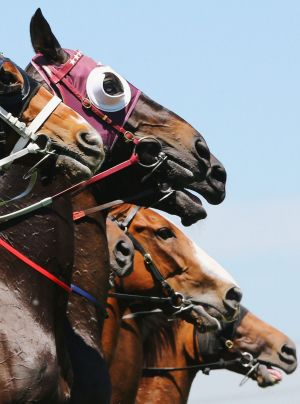 An international racing taskforce is set to begin investigating black market gambling.
