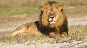 Cecil the lion was shot dead in 2015.