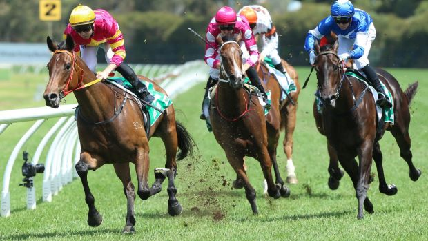Home town hope: Darts Away wins the Highway Handicap at Rosehill in November.