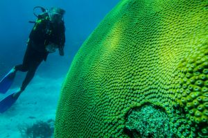 The Great Barrier Reef 2016. Divers look at fish life and coral on Flynn Reef off the coast of Cairns. 2nd November ...
