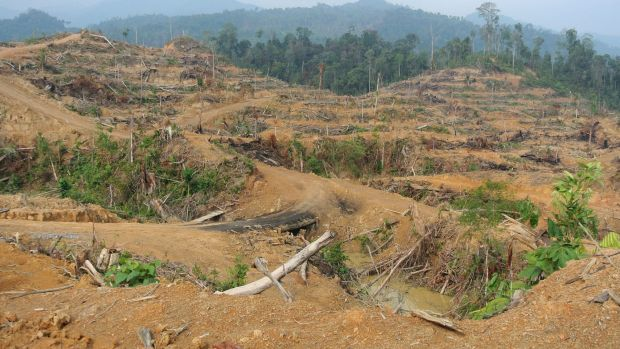 Freshly cleared forest inside the Leuser Ecosystem near Kuala Simpang in Aceh, March 2014. Local activists said this ...