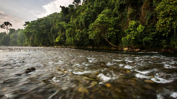 A river in the Leuser Ecosystem.