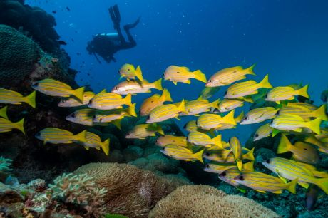 Record high water temperatures coral bleaching in 2016 and 2017.
