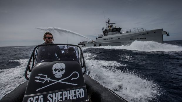 Sea Shepherd to suspend pursuit of Japanese whalers