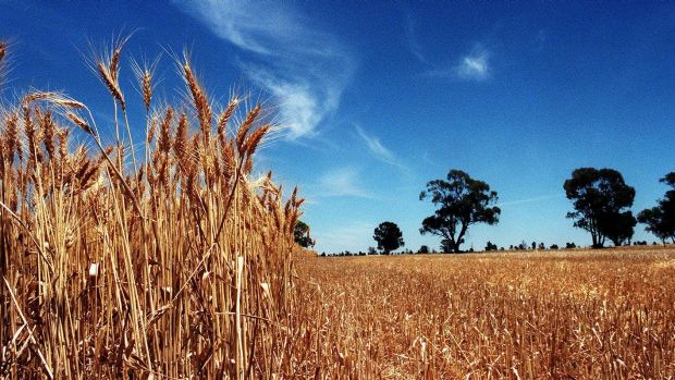 GrainCorp's underlying net profit surged in fiscal 2017 to $142 million.