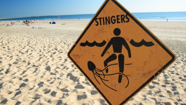 It is typically safe to swim at Broome beaches, and box jellyfish are considered rare.