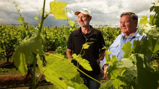 Do global clouds loom for international trade? Brokenwood Wines winemaker Iain Riggs and viticulturist Kieth Barry in ...