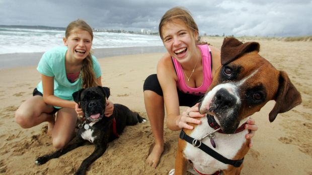 Is Palm Beach Sydney Dog Friendly