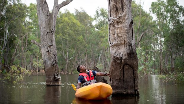 Jida Murray Gulpilil among the ceremonial scarred trees in Kinpanial Creek.