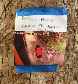 A note on a Redfern tree warning children to leave the gardens alone.