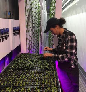 Another 27-year-old farmer, Electra Jarvis, comes to Square Roots three days per week. On Wednesdays, she spends four ...
