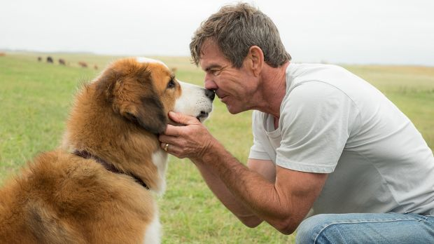 Dennis Quaid stars in <i>A Dog's Purpose</I>, based on humorist W. Bruce Cameron's bestselling book.