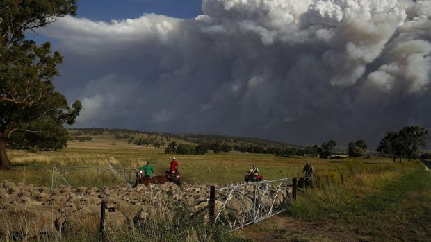 Livestock being relocated from property near Coolah as smoke from the Sir Ivan fire east of Dunedoo, NSW, seen in the ...