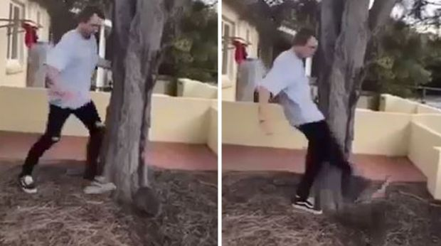 Harrison Angus McPherson pleaded guilty to animal cruelty after he was caught on camera kicking a quokka.