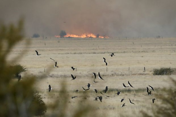 Birds taking flight during a fire at Carwoola, southeast of Canberra.