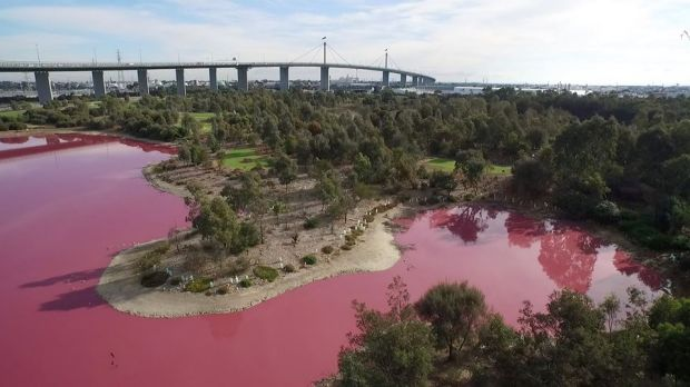 A salt lake in Westgate Park has turned pink.