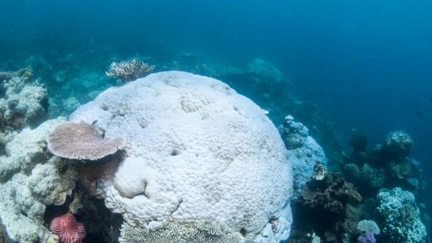 Another coral bleaching event is unfolding over parts of the Great Barrier Reef for the second year in a row.