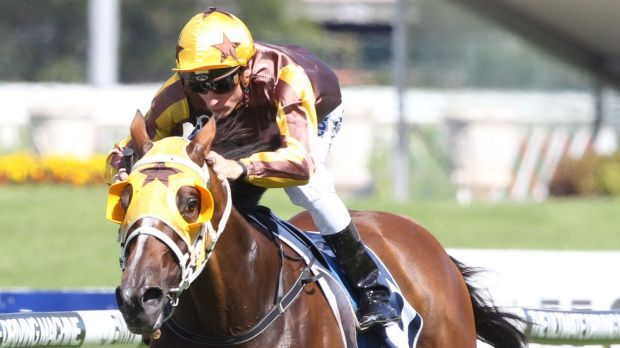 Maturing: Blake Shinn wins the Sky High Stakes on Tavago, and is ready for the Saturday's BMW.