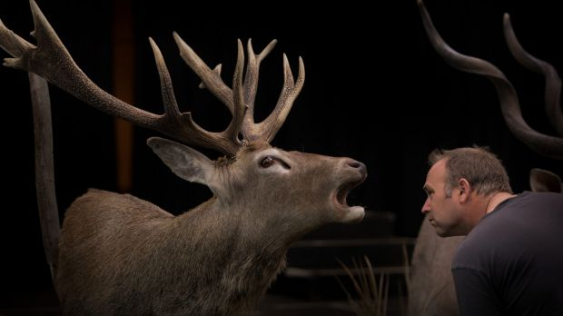 What did you say? Adam Price inspecting a more traditional deer exhibit (artist Gavin Counsell) at the Australian ...