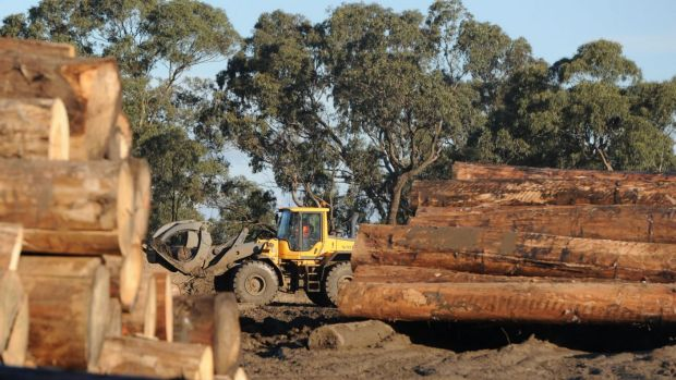 Australian Sustainable Hardwoods' Greenmill site in Heyfield.